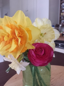 From my front yard garden's first round of flowers. A mix of daffodils and ranunculus, or Persian buttercups.