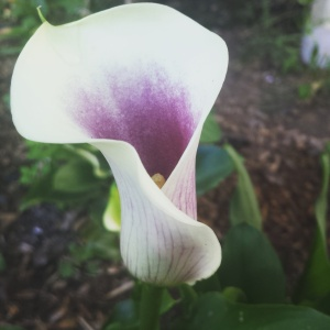 That calla, though.
